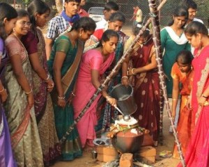 PONGAL_CELEBRATION_1330472g