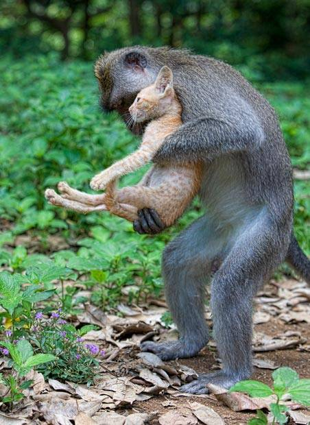 animal love 4
